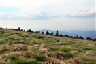 Roan Mountain Round Bald