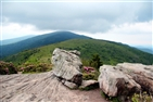 Roan Mountain Jane Bald